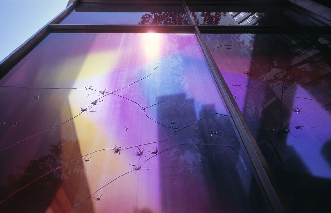 folia na oknie